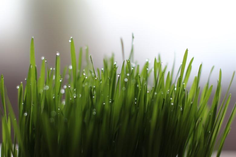 grass-1524838_1920