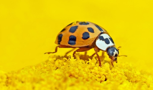 insect-1324398_1920